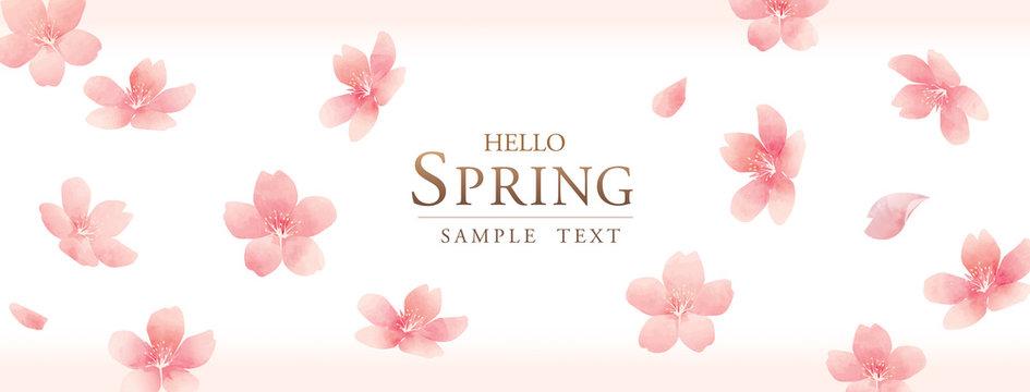 春の花 桜 spring cherry blossom background