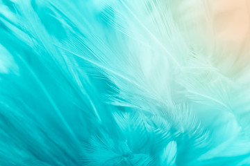 Wall Mural - Beautiful green turquoise color trends feather texture background with orange light