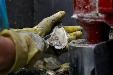 Alicia Odum of Barber's Seafood in Eastpoint, Florida, U.S., removes meat from the shell of an oyster from Texas