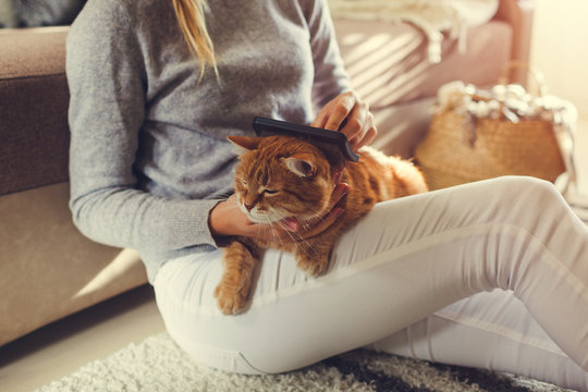 Combing ginger cat with comb brush at home. Woman taking care of pet removing hair sitting on floor. Clean animals