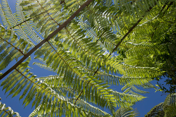 Printed roller blinds Cathedral Cove Coromandel New Zealand Cathedral Cove Hahei. Ferns and sun