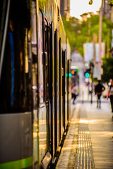 A famous Melbourne tram is stopped at a city tram stop in the golden late afternoon light.
