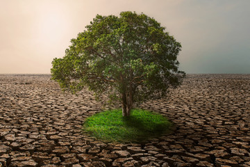 Wall Mural - tree with green grass growing on climate change  drought land