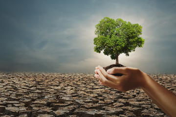 Wall Mural - hand holding big tree on arid with sunshine background. concept eco