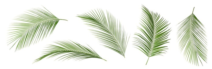 Set of tropical leaves on white background Wall mural