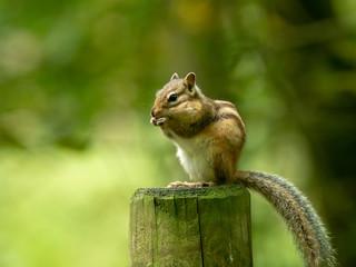 Tuinposter Eekhoorn Nature & Life