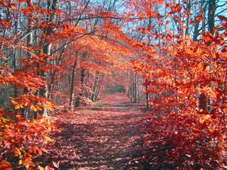 Fotorolgordijn Crimson autumn in the park