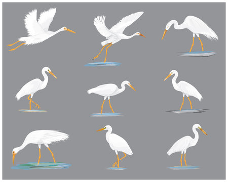 isolated white heron vector design