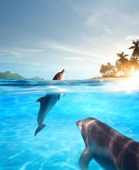 Spoed Fotobehang Dolfijn view of nice bottle nose dolphin swimming in blue crystal water