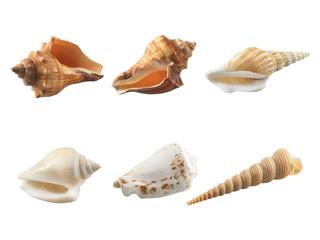 Empty seashell isolated on white background