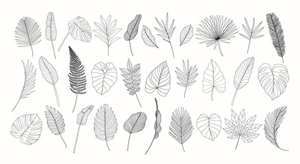 Line art tropical leaves set. Exotic leaves isolated on white background. Hand drawn floral clipart. Botanical illustration. Banana leaf drawing, monstera leaf. Trendy tropical line drawings.