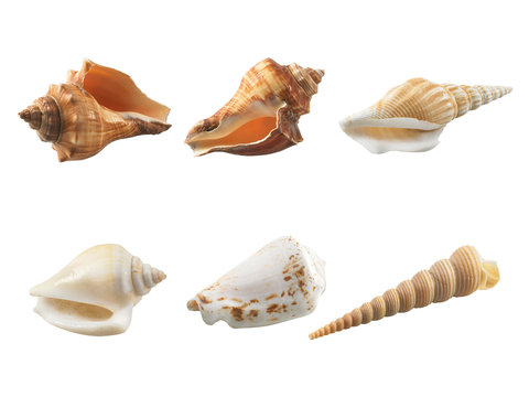 Empty seashell isolated on white background