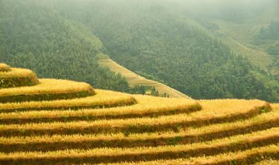 Fotorolgordijn Olijf Longji Rice Terraces