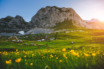 Wall Mural - Idyllic summer day in the Durmitor National park. Location place Sedlo pass, Montenegro.