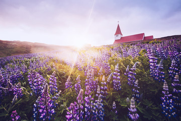壁紙(ウォールミューラル) - Great view of Vikurkirkja christian church. Location place Vik i Myrdal village, Iceland, Europe.