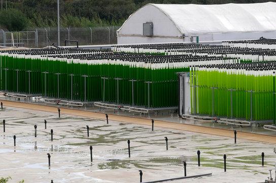 algae growing farm