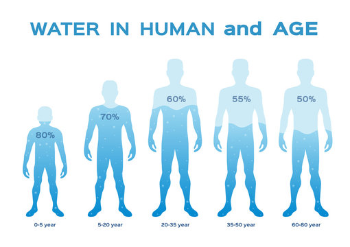water level  level,in the human body and age vector / infographic