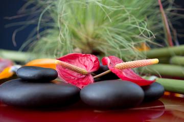 splenditi fiori su pietre nere con sfondo di rami di papiro verde