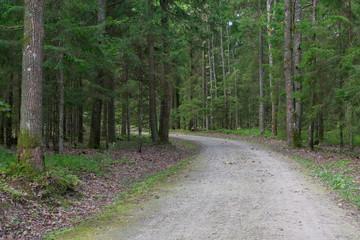 Deurstickers Mysterious dark pathway road in the woods
