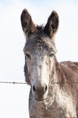 Fotobehang Ezel Portrait of a donkey isolated against the sky.
