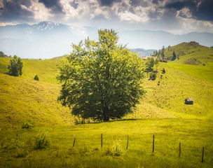Canvas Prints Honey tree in the field