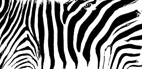 Zebra print skin stripes, abstract pattern, line background, fabric. Amazing hand drawn vector illustration. Black and white