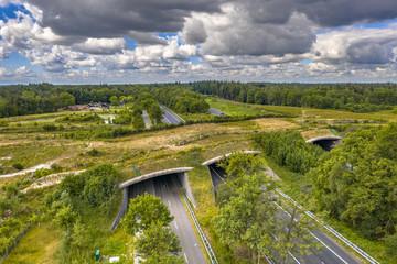 Fototapeta Ecoduct wildlife crossing obraz
