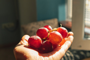 Bunch of grapes in hand with warm sun light. Fototapete