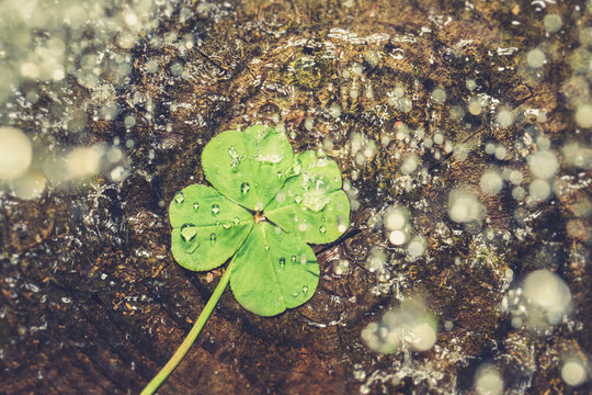 Water splashing on lucky four leaf clover, good luck shamrock, or lucky charm.