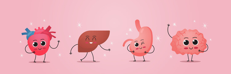 funny anatomical mascot heart liver stomach brain characters cute human body internal organs anatomy healthcare medical concept horizontal vector illustration