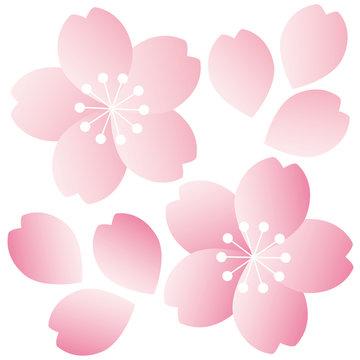 桜アイコン01