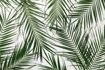 Spoed Fotobehang Tropische Bladeren Tropical background with green natural monstera leaves