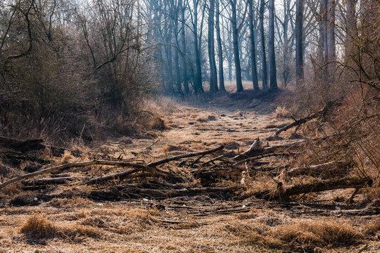 Sturmholz an einem ausgetrockneten Flussbett im Gegenlicht