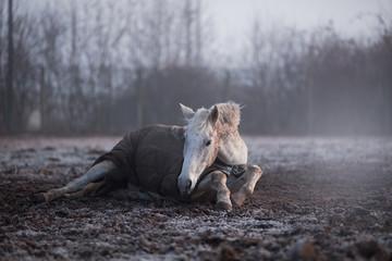 Stores à enrouleur Chevaux cheval couché