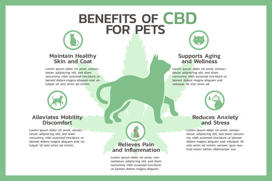 benefits of CBD for pets infographic, healthcare and medical about cannabis, hemp, marijuana, and weed, vector flat symbol icon illustration in horizontal design