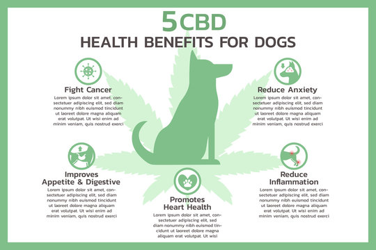 five CBD health benefits for dogs infographic, healthcare and medical about cannabis, hemp, marijuana, and weed, vector flat symbol icon illustration in horizontal design