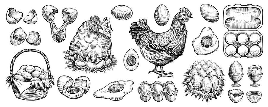 Chicken eggs and farm hen hand drawn vector. Engraved elements: nest, full basket, broken, boiled, fresh and other eggs.