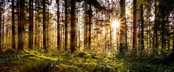 Sunbeams through the trees , France, D3dec Fotobehang