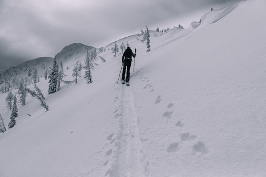 Backcountry ski touring in canadian mountains splitboarder