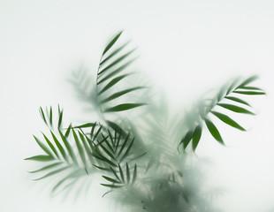 Fototapeta palm in fog obraz