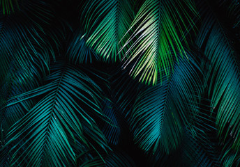 Photo sur Plexiglas Palmier Tropical palm leaf background