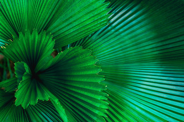 Fotobehang - tropical palm leaf and shadow, abstract natural green background, dark blue tone
