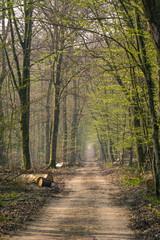 Foto op Aluminium Weg in bos Chemin dans une forêt