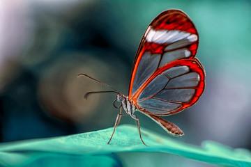 Self adhesive Wall Murals Butterfly Closeup beautiful butterfly in a summer garden