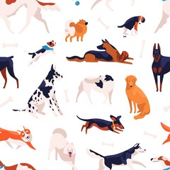 Various domestic doggy breeds seamless pattern. Different cute purebred dog posing, sitting, standing and playing isolated on white background. Adorable pet animal type vector flat illustration