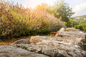 Fototapete - Stone background of free space and spring background