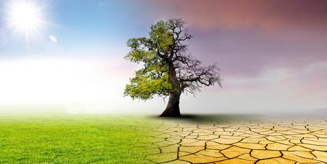 Fotorollo Lavendel Klimawandel - Landschaft mit ausgetrockneter Erde; Wiese und Eichenbaum