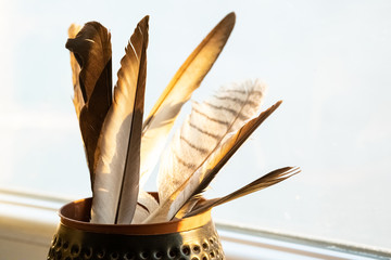 Collection of several bird feathers in a pot under the sunshine