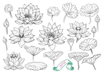 .A collection of lotus sketches. A variety of vector drawings of lotuses, buds and leaves in vintage style.Hand drawn floral illustration.