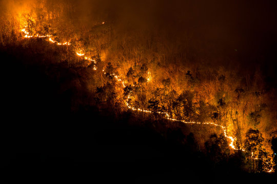 Forest fires, red and orange forest fires at night in the dry season